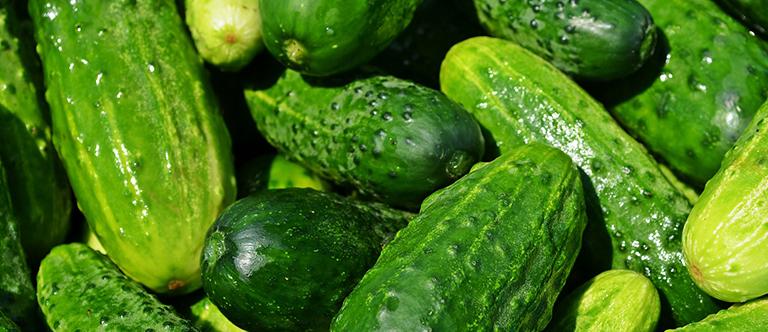 Cucumber Shelf Life How Long Does Cucumber Last Fresher Pantry